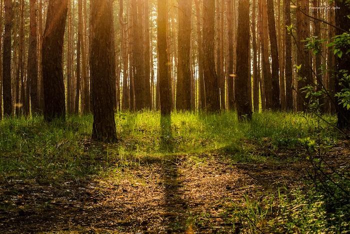 cause della deforestazione