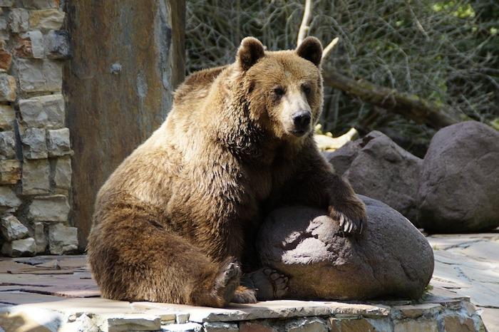 animali in pericolo di estinzione in Italia