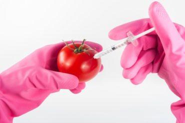 cosa sono gli OGM in agricoltura