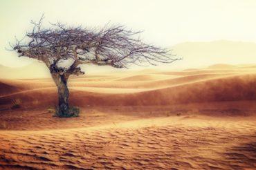 cambiamenti climatici cause e conseguenze